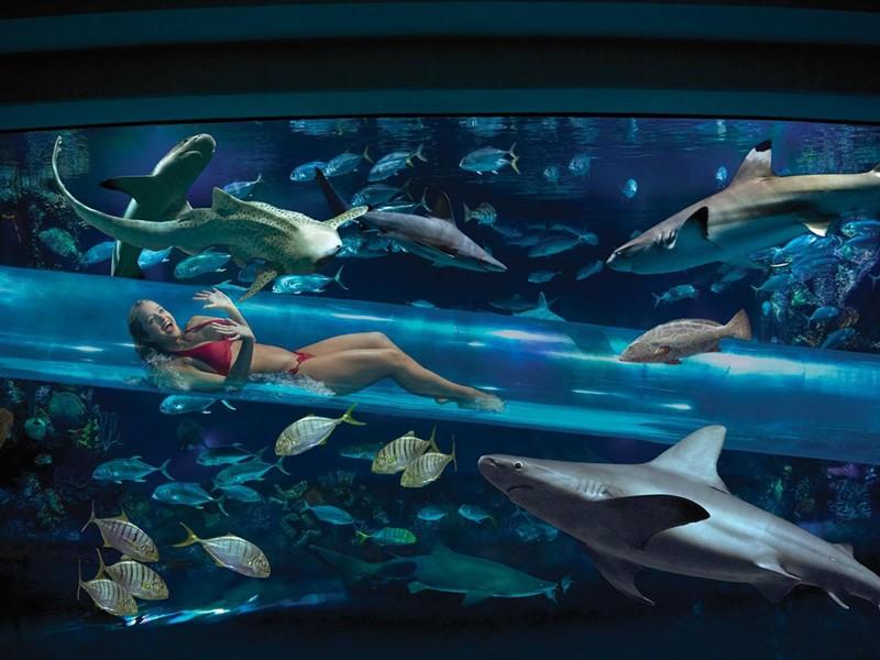 Nagez au milieu des requins au Golden Nugget à Las Vegas