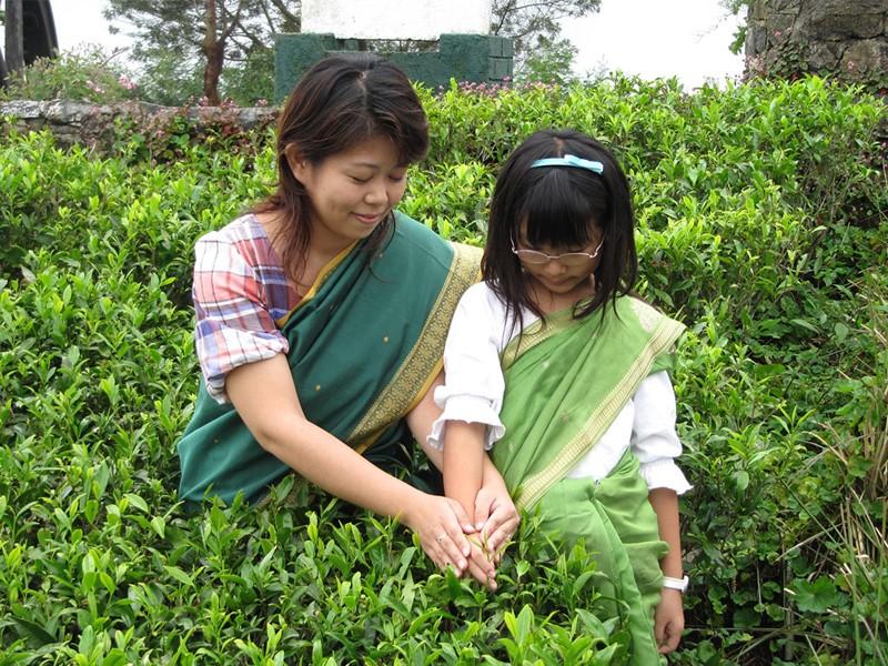 Cueillette de thé à l'hôtel Heritance Tea Factory
