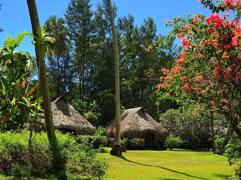 Le jardin de l'hôtel Hibiscus en Polynesie