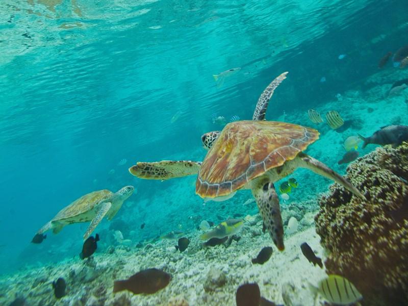 Profitez de l'île pour découvrir les fonds marins