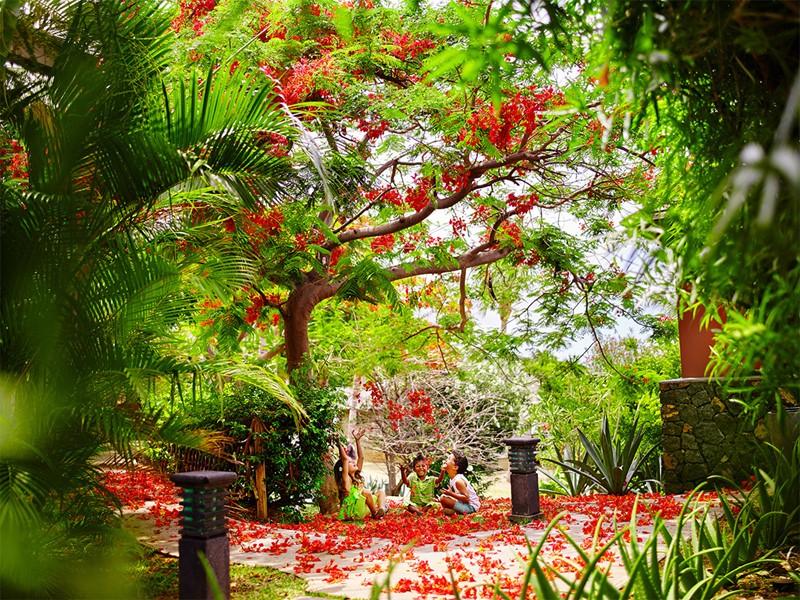 Le jardin verdoyant