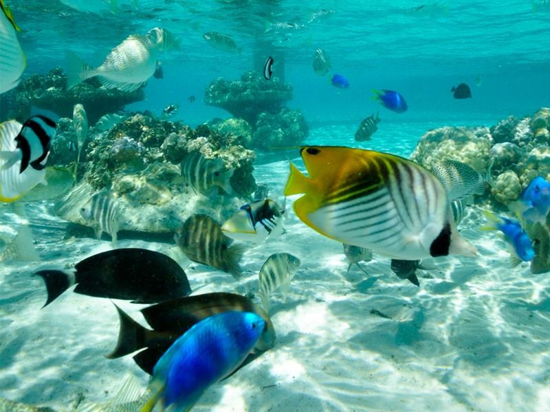 Explorez le magnifique jardin de corail