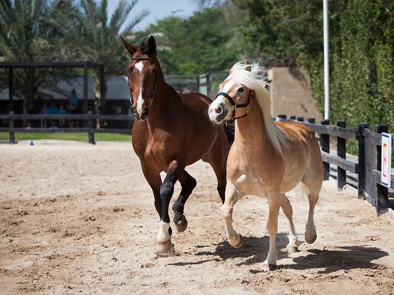 Équitation à l'hôtel Palm Tree Court à Dubaï