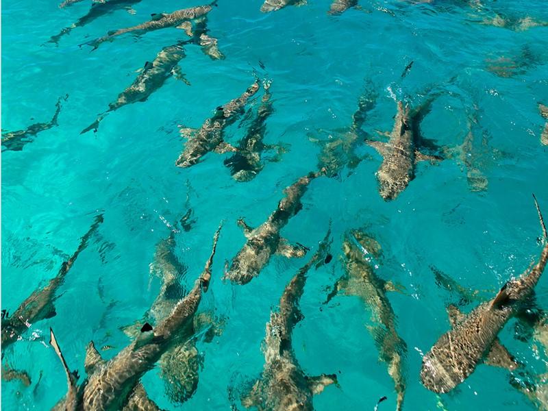 La faune marine entourant l'hôtel Kia Ora, en Polynésie