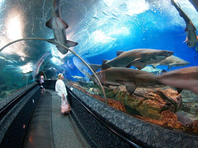 Visite de l'Underwater World à Singapour