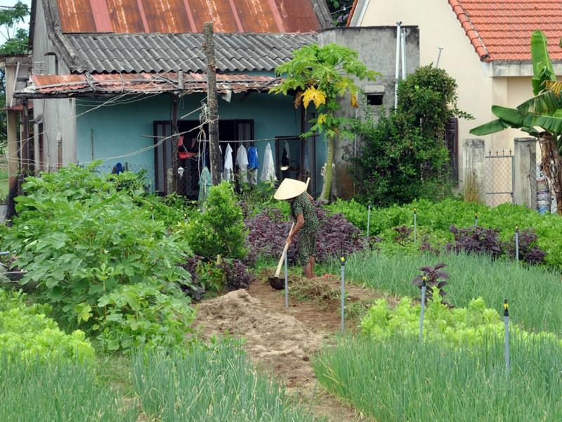 Visite du village de Tra Que, connu pour ses légumes et ses herbes aromatiques