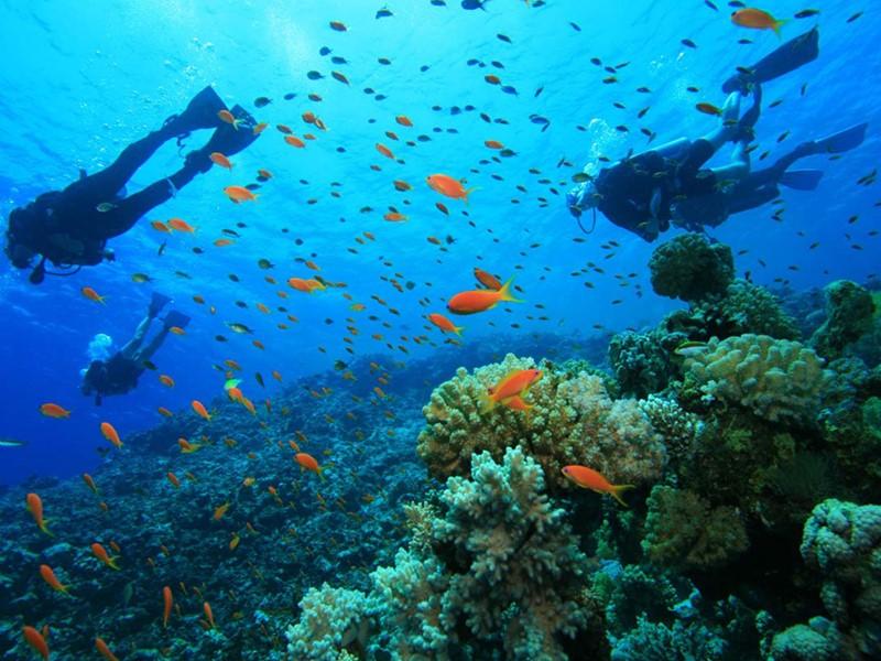 Les passionnés de plongée partiront sur les îles Gili où les fonds coralliens sont les plus exceptionnels