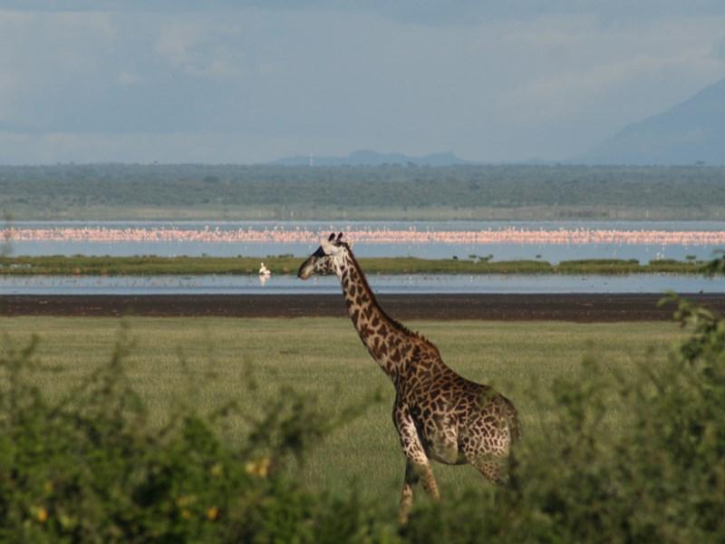 Séjour au coeur du Lac Manyara