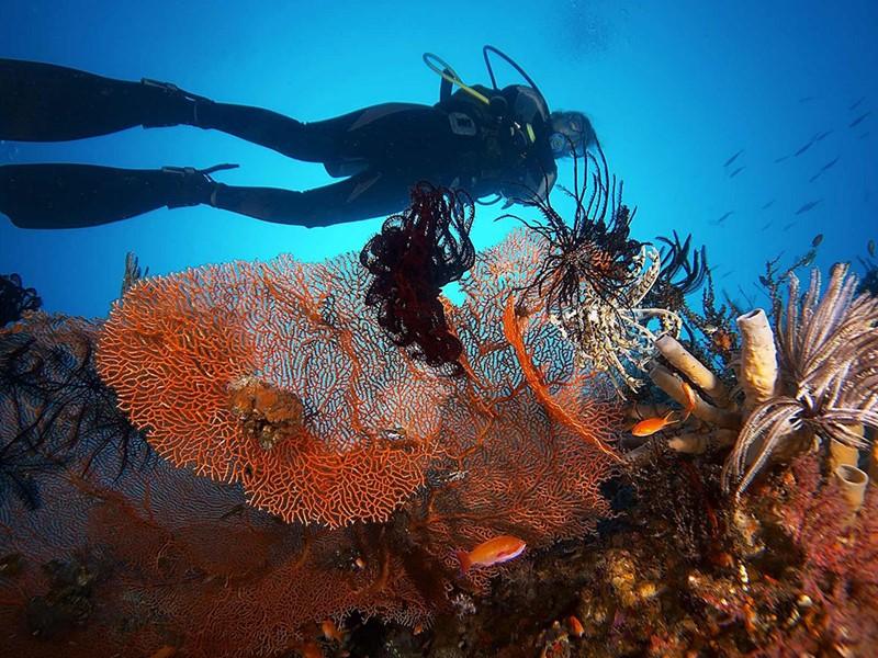 Plongez dans les fonds marins qui entourent l'Alila Manggis