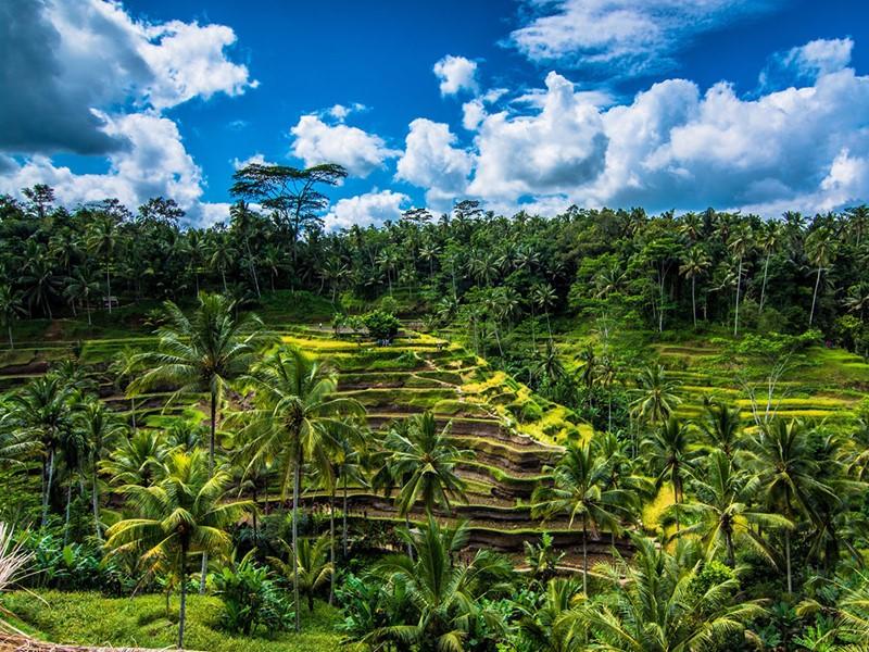 Traversez les belles rizières en terrasse de Tegalalang qui sont une exception à Bali