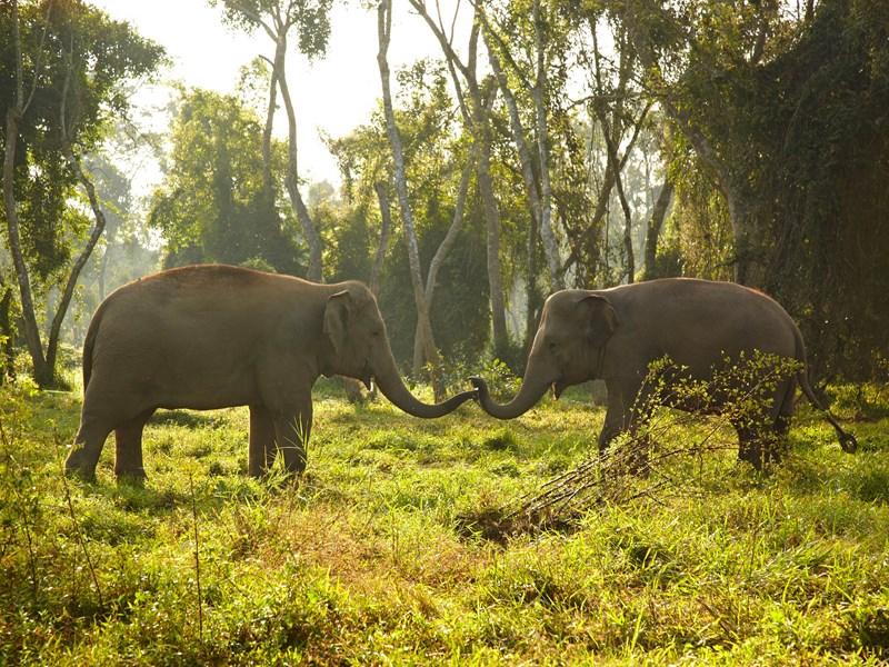 Croisez les éléphants à l'Anantara Golden Triangle