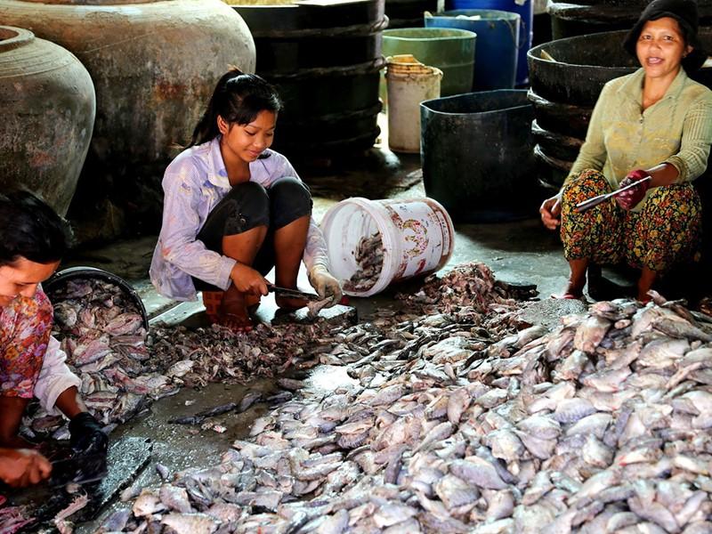 Fabrication du 'Prahok' à Battambang
