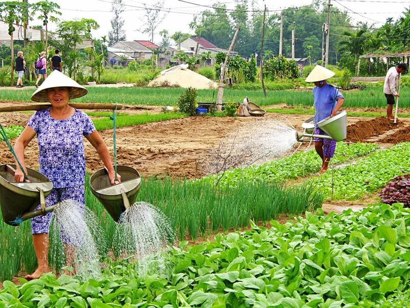 Visite du village de légumes de Tra Que et découvrez la vie des cultivateurs
