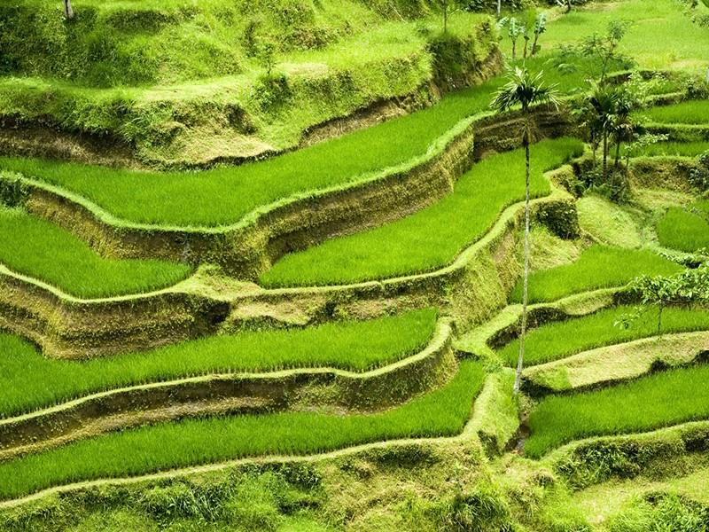 Ressourcer dans un cadre naturel unique, baladez-vous entre les villages et les rizières
