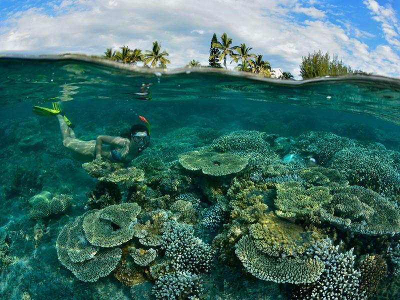 Explorez les exceptionnels fonds marins de l'Océan Indien