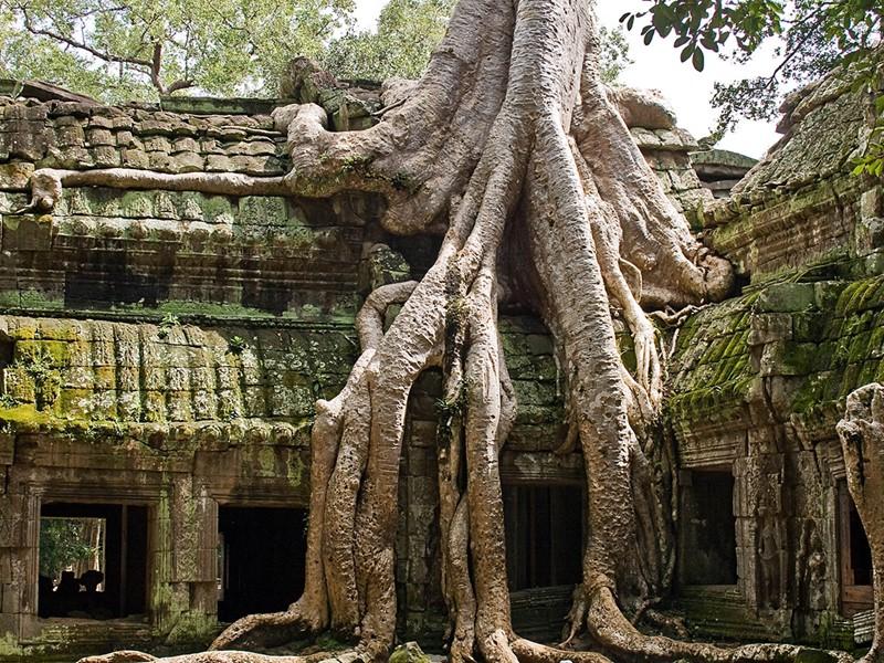 Les merveilleux temples d'Angkor, nichés dans la végétation