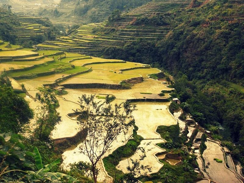Les merveilleuses rizières du delta du Fleuve Rouge