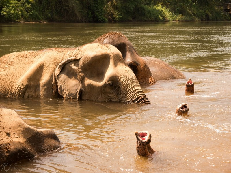 Elephant Haven à Kanchanaburi