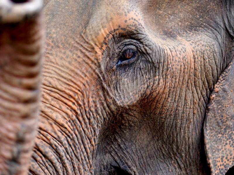 Plongez dans le regards des éléphants
