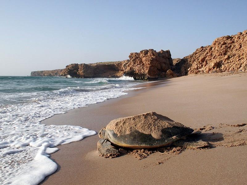La plage de Ras Al Hass