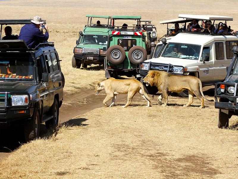 Safari dans le cratère de Ngorongoro en Tanzanie