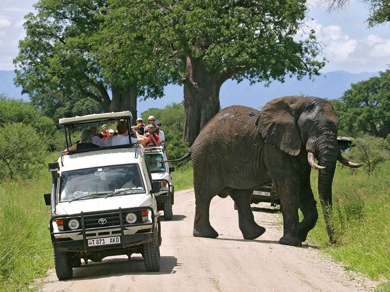 Safari dans le parc de Tarangire en Tanzanie