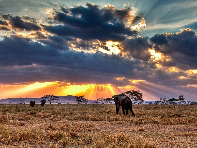 Vue des éléphants du Serengeti en Tanzanie