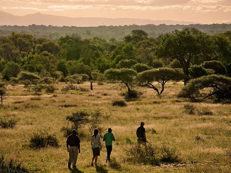 Promenade dans la brousse à la rencontre des animaux sauvages