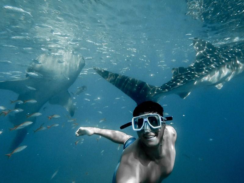 Nagez avec les requins baleines aux Maldives