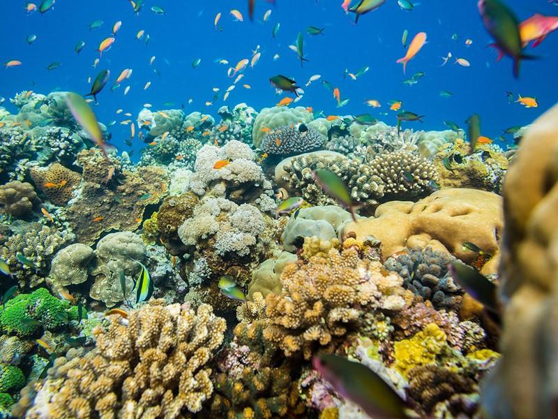Explorez des fonds marins d'une richesse exceptionnelle d'île de Pemba