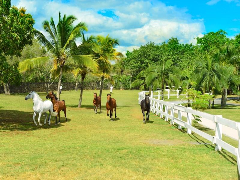 Le centre équestre, unique à Maurice