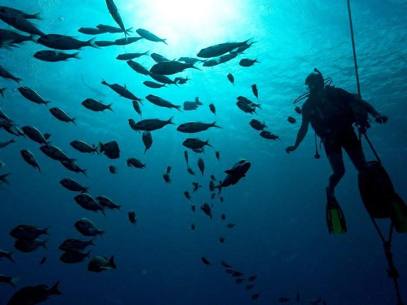 Explorez le magnifique jardin de corail du Moorea Beach Lodge