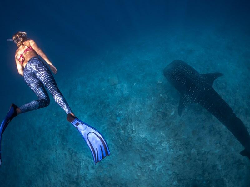 Plongée avec un requin baleine