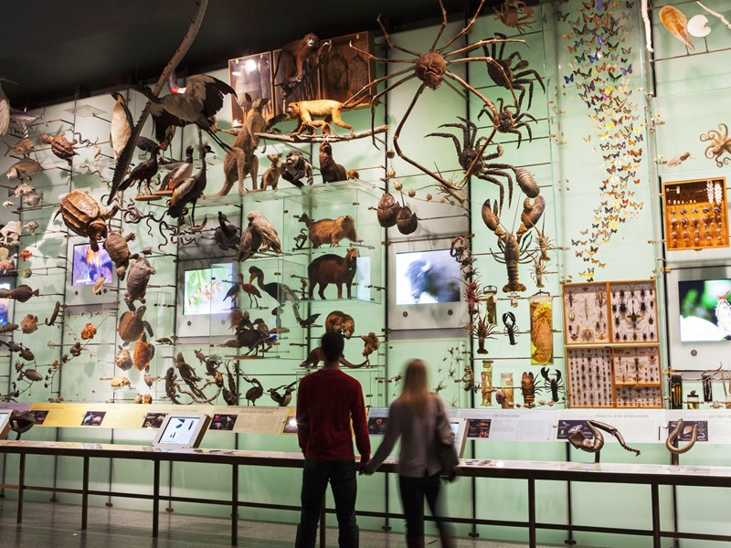 L'American Museum of Natural History, le légendaire Musée d'Histoire Naturelle de New York
