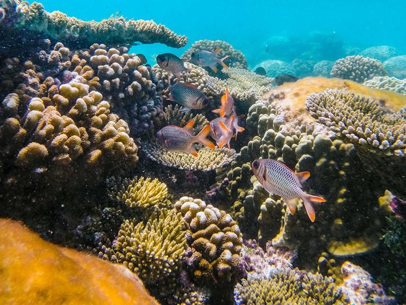 Découverte des fonds marins d'une richesse exceptionnelle au Ninamu