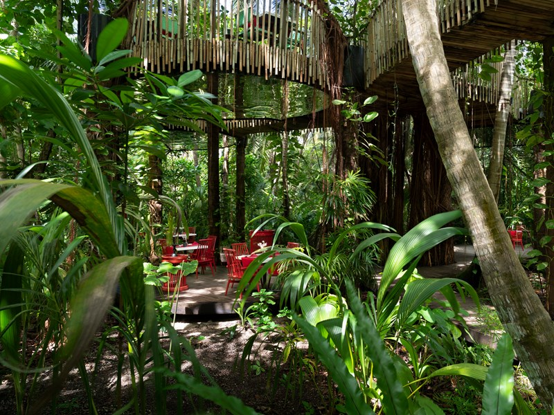 Le restaurant Nest, perché dans les arbres