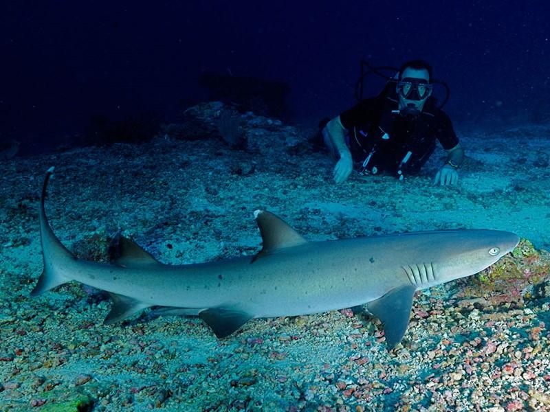 Plongez dans les fonds marins de l'atoll de Malé