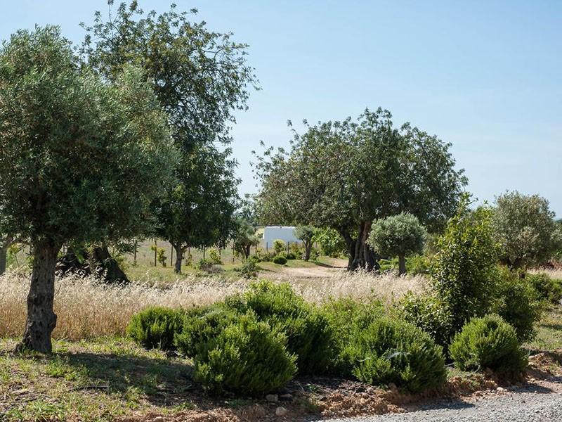 Un verger parsemé d'agrumes et d'oliviers