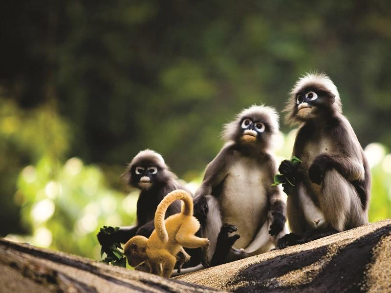 Famille de petits singes joueurs