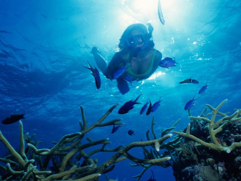 Explorez les exceptionnels fonds marins de l'île Maurice