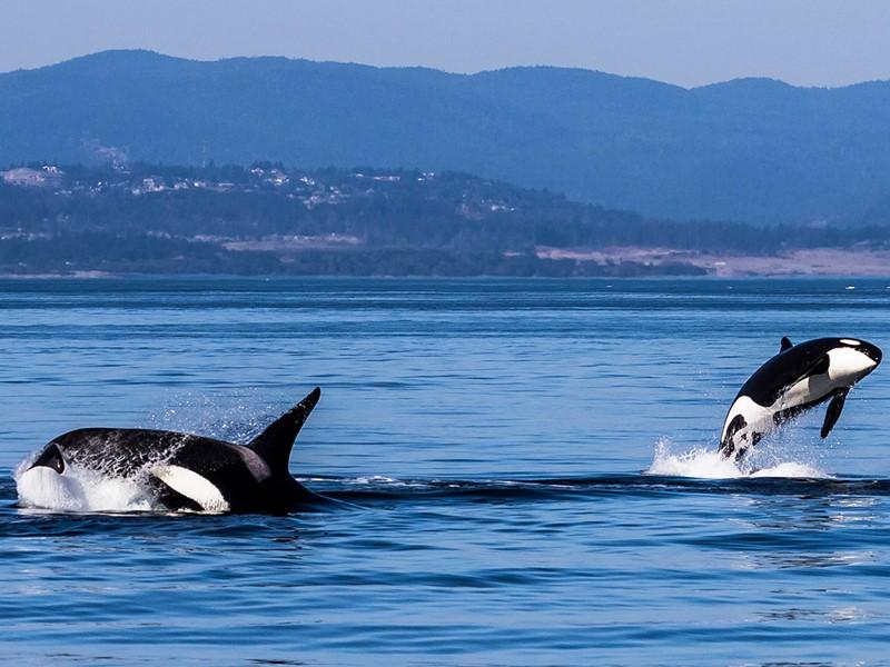 Partez à la rencontre des baleines et des phoques de Tadoussac