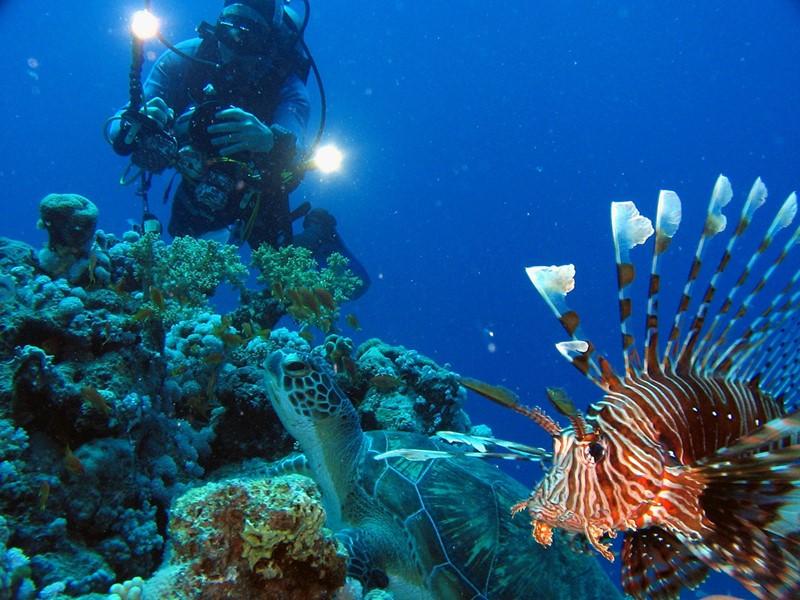 Partez à la découverte de la richesse des fonds marins mauriciens