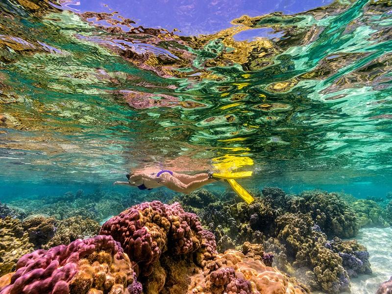 Explorez le magnifique jardin de corail de Tahaa.
