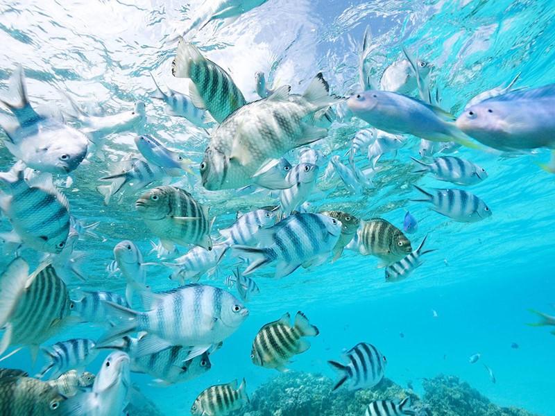 Découvrez les fonds marins exceptionnels de Bora Bora.