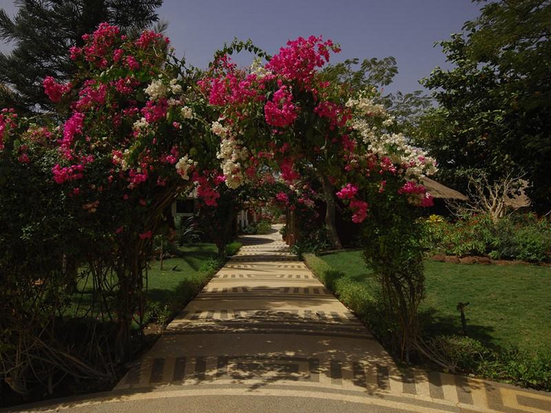 Le jardin de l'hôtel Royam situé en Afrique