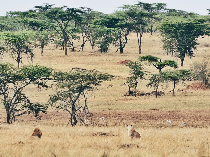 Les plaines du Serengeti