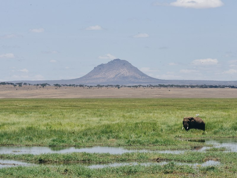 Éléphant à Tarangire