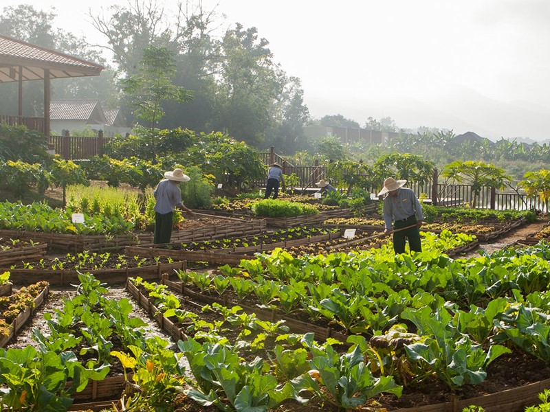 Splendide jardin organique
