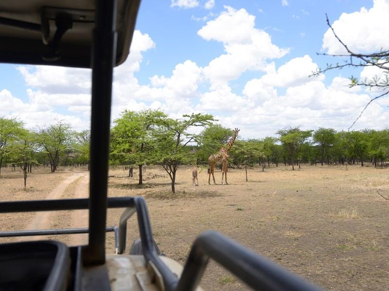 Rencontre avec une famille de girafe