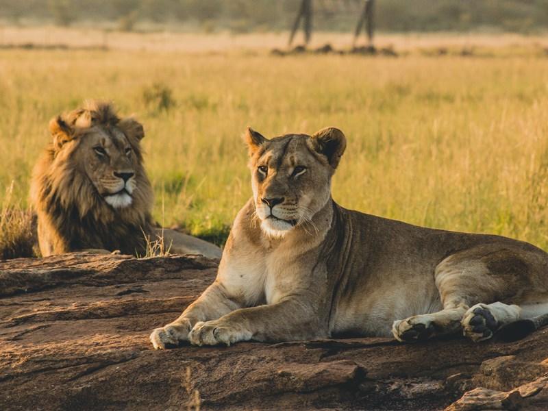 Séjour à Serengeti